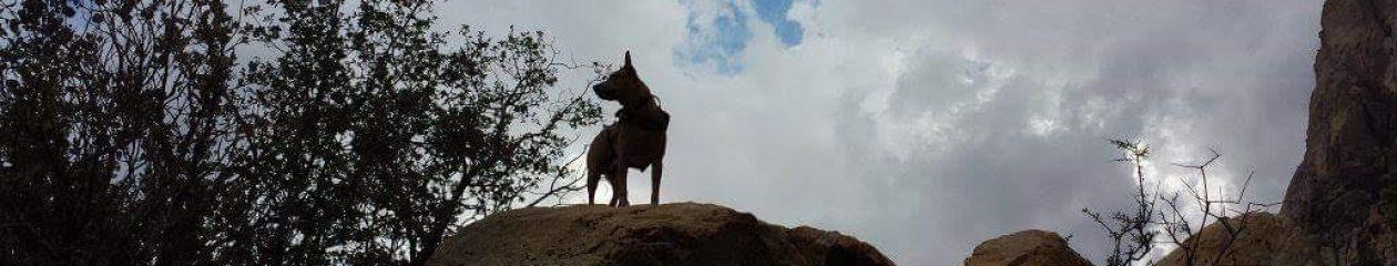 Desert Dogs For Veterans
